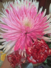 Flowers dad brought home for Julie & I